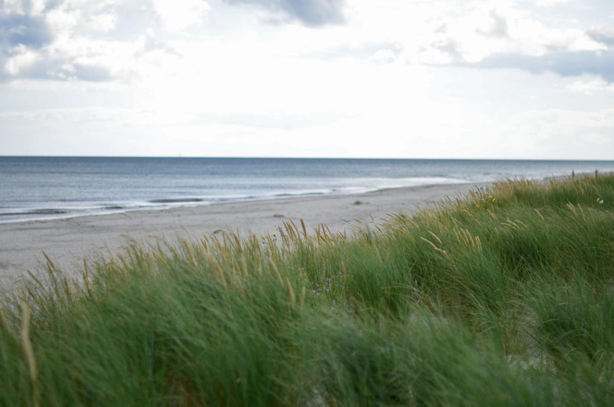 dania morze